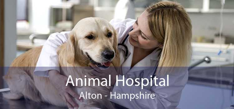 Animal Hospital Alton - Hampshire