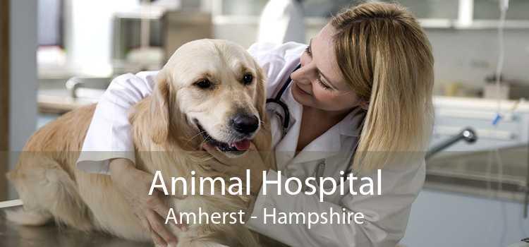 Animal Hospital Amherst - Hampshire
