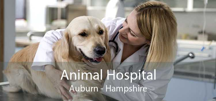 Animal Hospital Auburn - Hampshire