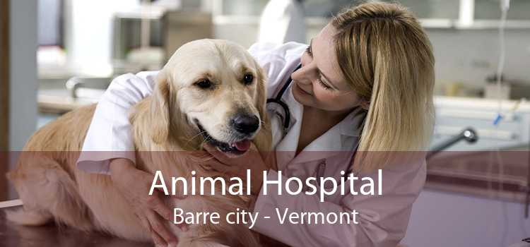 Animal Hospital Barre city - Vermont