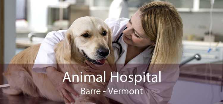 Animal Hospital Barre - Vermont