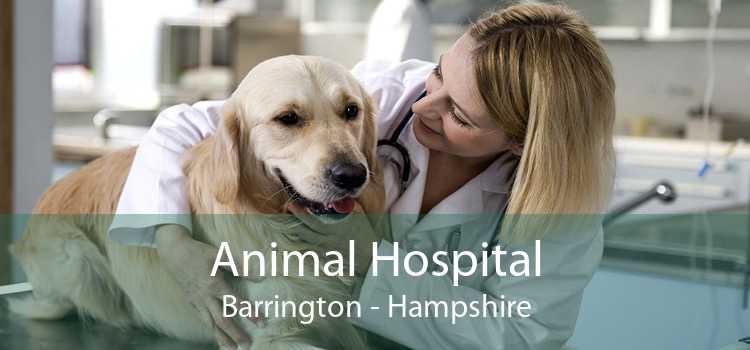 Animal Hospital Barrington - Hampshire