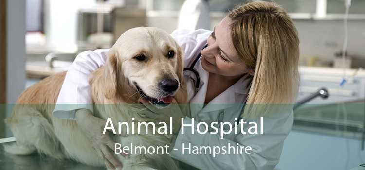 Animal Hospital Belmont - Hampshire