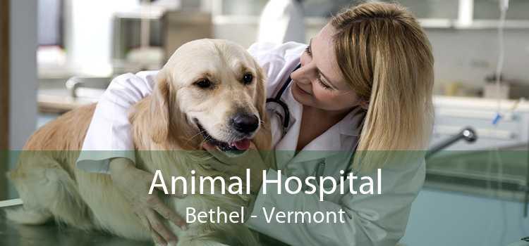 Animal Hospital Bethel - Vermont