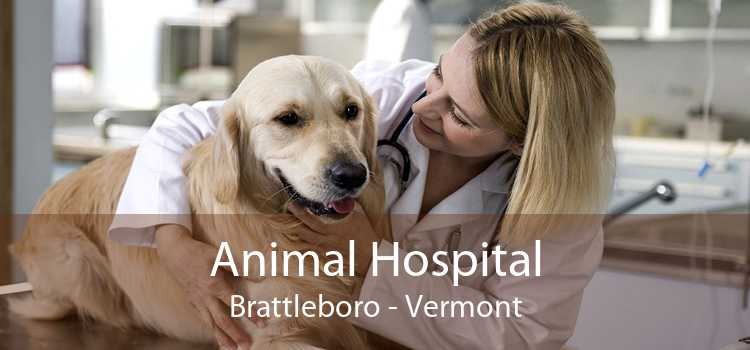 Animal Hospital Brattleboro - Vermont
