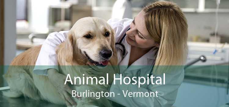 Animal Hospital Burlington - Vermont