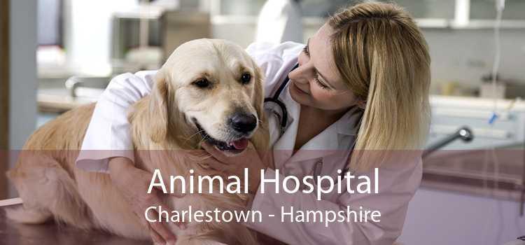 Animal Hospital Charlestown - Hampshire
