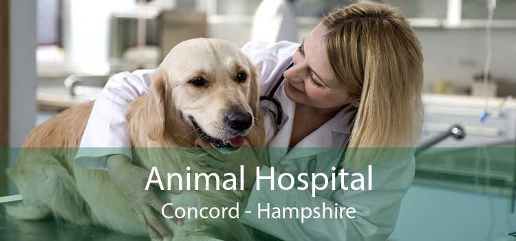 Animal Hospital Concord - Hampshire