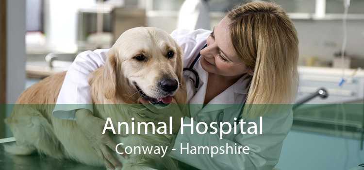 Animal Hospital Conway - Hampshire