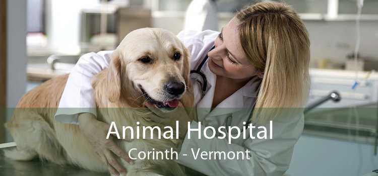 Animal Hospital Corinth - Vermont