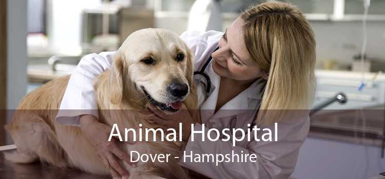 Animal Hospital Dover - Hampshire
