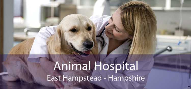 Animal Hospital East Hampstead - Hampshire