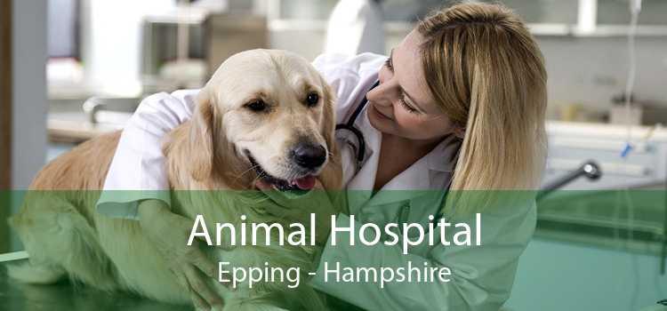 Animal Hospital Epping - Hampshire