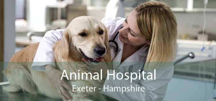 Animal Hospital Exeter - Hampshire