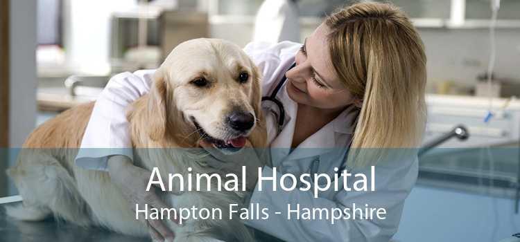 Animal Hospital Hampton Falls - Hampshire