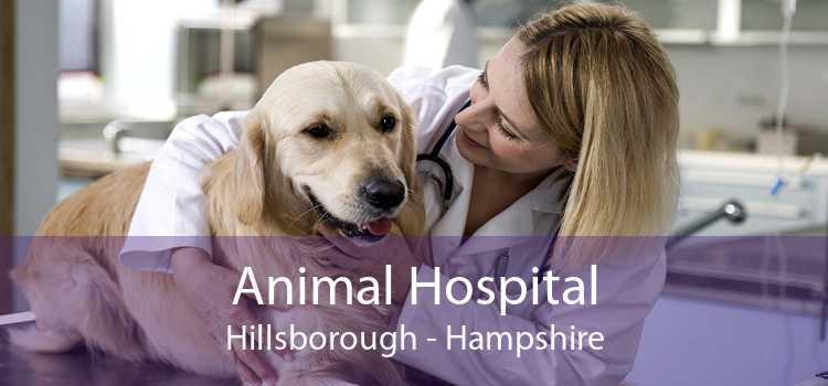 Animal Hospital Hillsborough - Hampshire