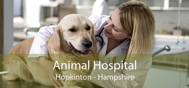 Animal Hospital Hopkinton - Hampshire