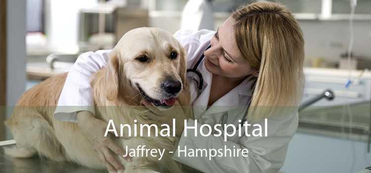 Animal Hospital Jaffrey - Hampshire