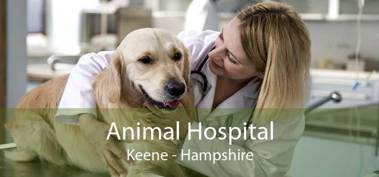 Animal Hospital Keene - Hampshire