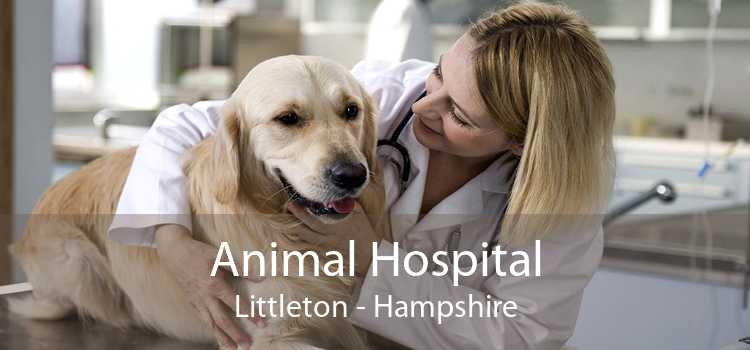 Animal Hospital Littleton - Hampshire