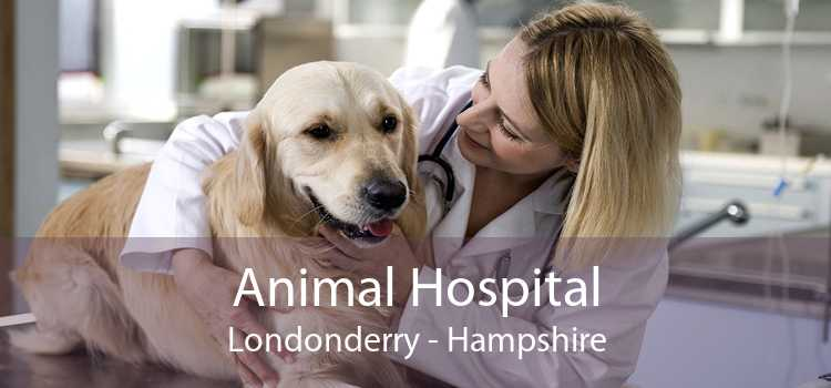 Animal Hospital Londonderry - Hampshire