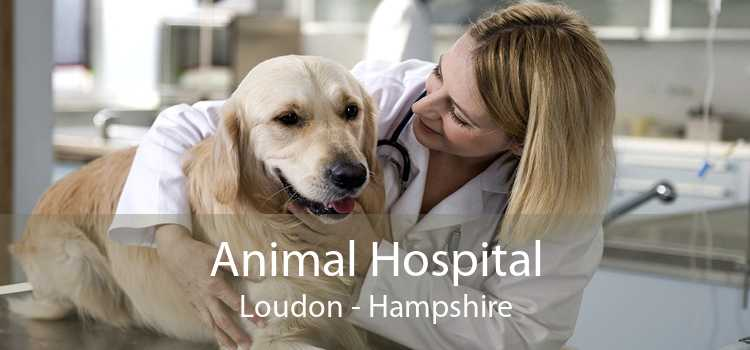 Animal Hospital Loudon - Hampshire