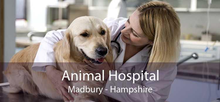 Animal Hospital Madbury - Hampshire