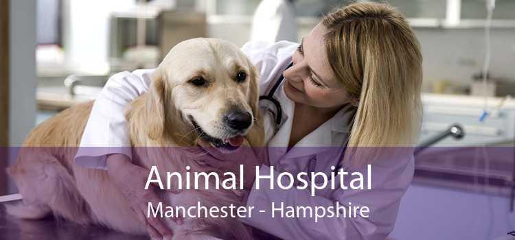 Animal Hospital Manchester - Hampshire