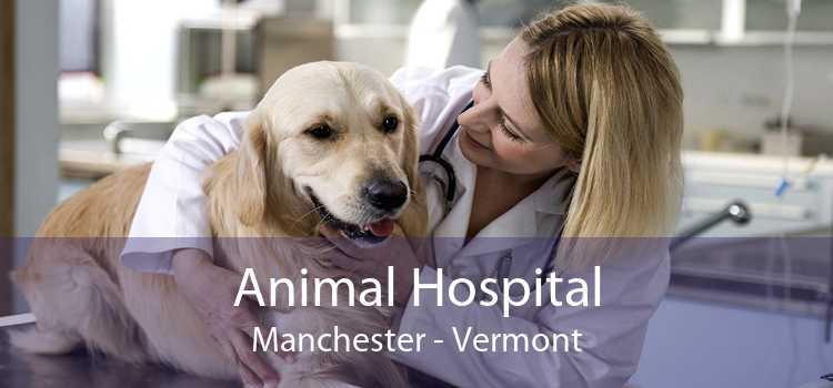 Animal Hospital Manchester - Vermont