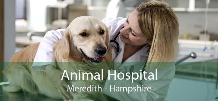 Animal Hospital Meredith - Hampshire