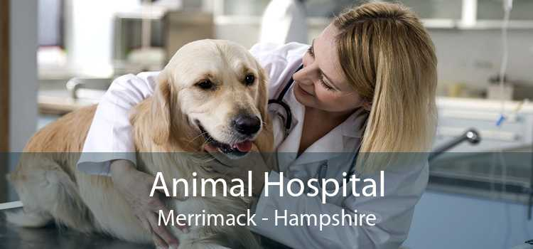 Animal Hospital Merrimack - Hampshire