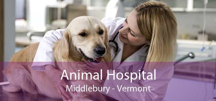 Animal Hospital Middlebury - Vermont