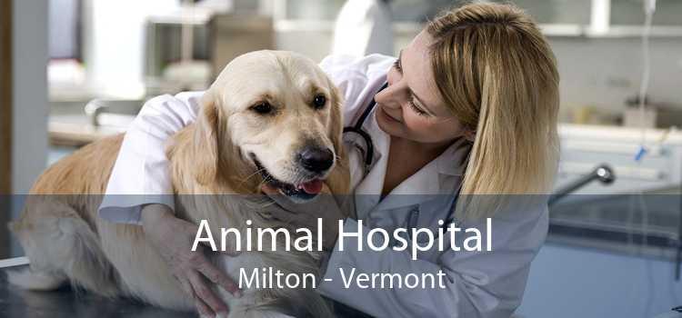 Animal Hospital Milton - Vermont