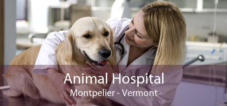 Animal Hospital Montpelier - Vermont