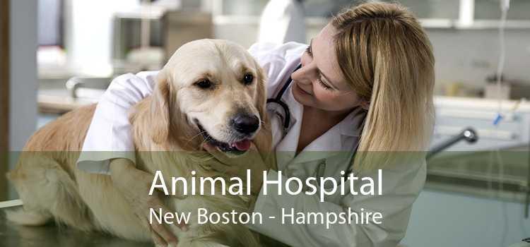 Animal Hospital New Boston - Hampshire