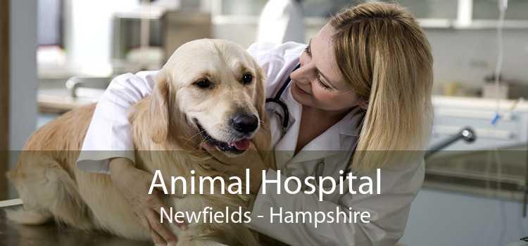 Animal Hospital Newfields - Hampshire