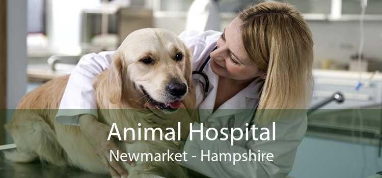 Animal Hospital Newmarket - Hampshire