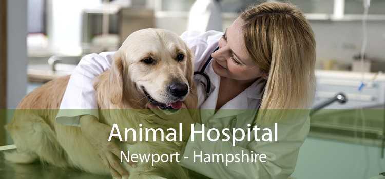 Animal Hospital Newport - Hampshire