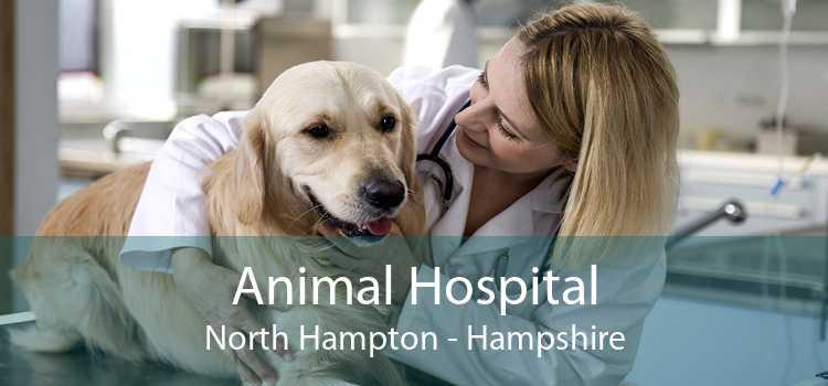 Animal Hospital North Hampton - Hampshire