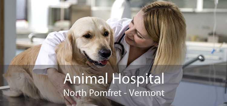 Animal Hospital North Pomfret - Vermont