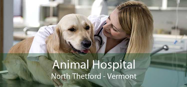 Animal Hospital North Thetford - Vermont