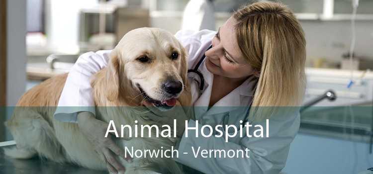 Animal Hospital Norwich - Vermont
