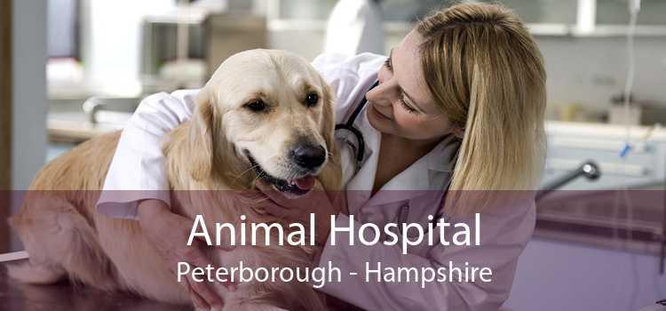 Animal Hospital Peterborough - Hampshire