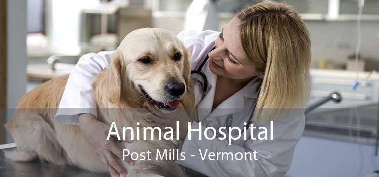 Animal Hospital Post Mills - Vermont