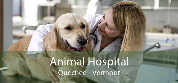 Animal Hospital Quechee - Vermont