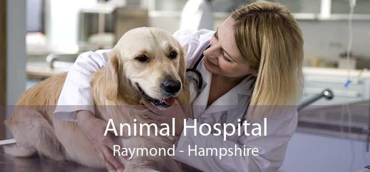 Animal Hospital Raymond - Hampshire