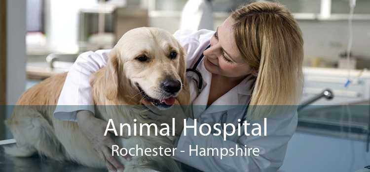 Animal Hospital Rochester - Hampshire