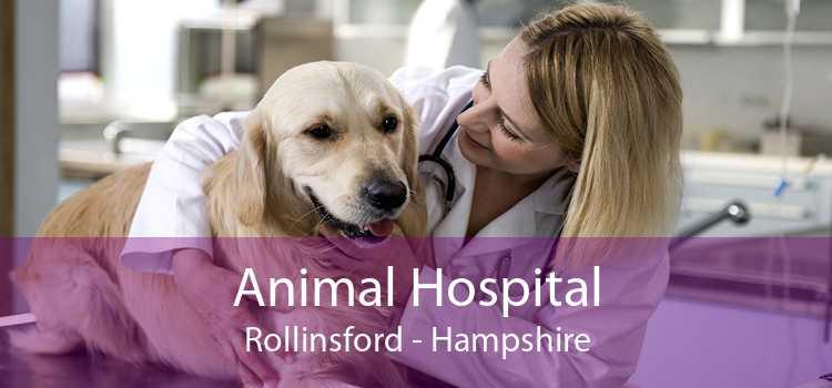 Animal Hospital Rollinsford - Hampshire