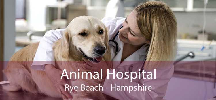 Animal Hospital Rye Beach - Hampshire