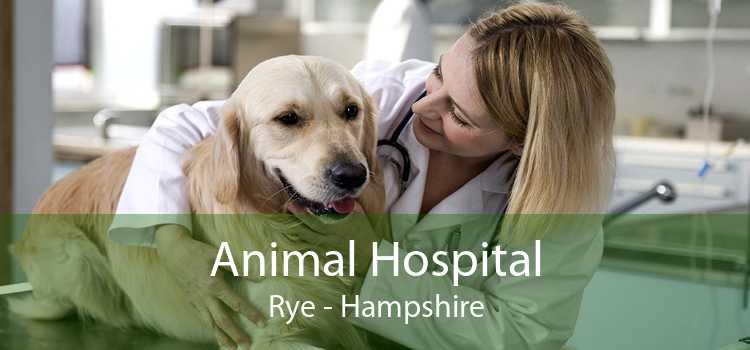 Animal Hospital Rye - Hampshire